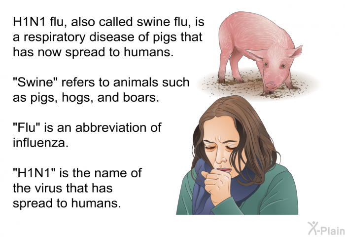 "H1N1 flu, also called swine flu, is a respiratory disease of pigs that has now spread to humans. ""Swine"" refers to animals such as pigs, hogs, and boars. ""Flu"" is an abbreviation of influenza. ""H1N1"" is the name of the virus that has spread to humans."