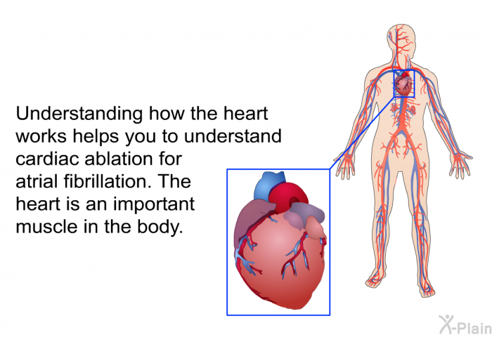 how the heart works - 700×480
